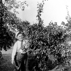 Men standing next to prune trees in the Bidwell Orchards
