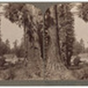 Calaveras Big Tree Grove Hotel, a beautiful retreat among the Giant Sequoias, ...