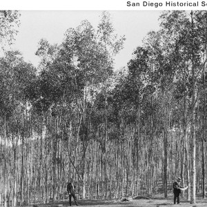 Two men standing in a grove of eucalyptus trees in Rancho Santa ...