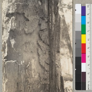 A close up of rodent work in rotten sapwood. See #6413. Aug. ...
