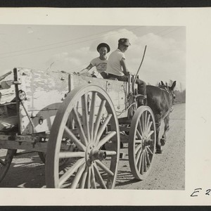 Back to the days of the mule, as two evacuee boys haul ...