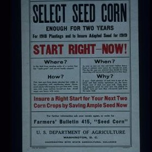 Home-grown seed is surest and best; select seed corn enough for two ...