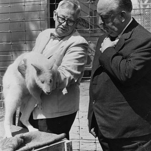 Alfred Hitchcock and Sir Edward Hallstrom inspect albino kangaroo