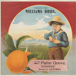 "Crate label, ""PACKED FOR WILLIAMS BROS."" from the Palm Grove, Orange, California"
