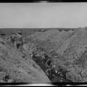 Men in Trench with Cows Laying Inside