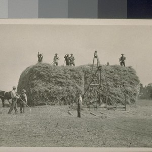 [Japanese laborers stacking hay.]