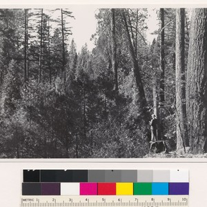 1.5 miles northwest of Pettijohn Peak. Old growth- young growth (31) stand ...