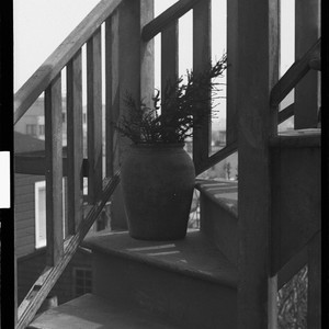 [Potted plant on stairway.] [negative]