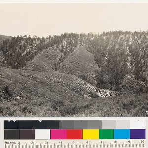Timber area southwest of Mt. Gleason. Western yellow pine type on the ...