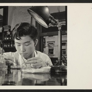 Shin Tanaka, 16-year-old Issei from the Central Utah Relocation Center, who plans ...