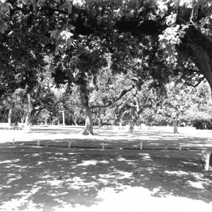 Playground at Doyle Park, Santa Rosa, California, 1965