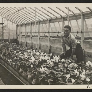 San Leandro, Calif.--Greenhouse on nursery operated, before evacuation, by horticultural experts of ...