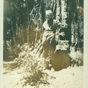 Unidentified man standing in front of a redwood tree