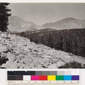 Looking north from hill 10553 (Chagoopa Plateau) at pure foxtail pine type, ...