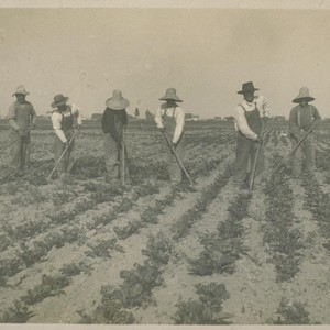 [Japanese laborers cultivating a field.]