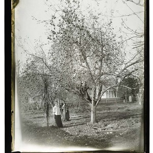 [Ericson home 14th and H Arcata /unknown/Several persons posing in the orchard]