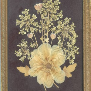 Pressed flowers in frame