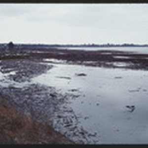 OCT87P10-24: Mudflats 1 week post marsh clean up
