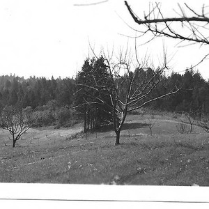 Top of apple and pear orchards on the Taylor property on Taylor ...