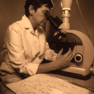 Unidentified female faculty member peering through a microscope. These slides are tinted ...