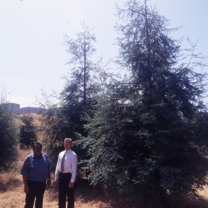 Men Posing with Trees