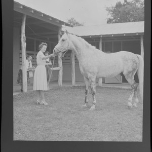 [Candid photographs of House Beautiful staff]. Woman and horse