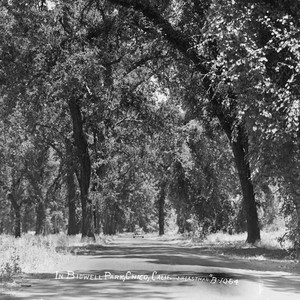 In Bidwell Park, Chico, Calif