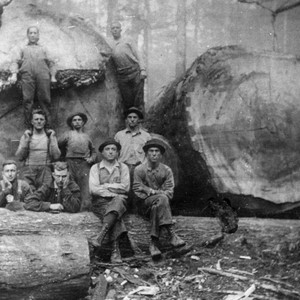 Group of Loggers