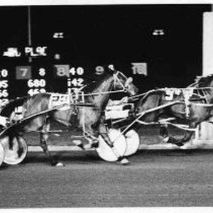 View of harness racing at Cal Expo in the fourth race opening ...