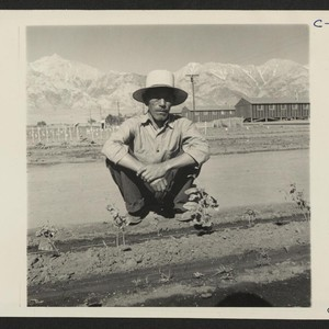 Manzanar, Calif.--This evacuee spends most of his time at the Hobby Gardens ...