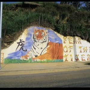 Year of the Tiger, Los Angeles, 1998