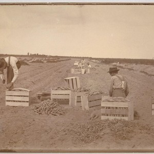 [Workers in field]
