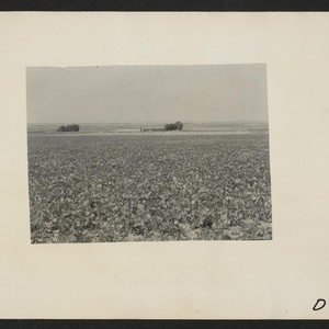 Eden, Idaho--A view of a farm a few miles south of the ...