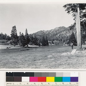 Near Summit of Mt. Rose road. Mountain meadow surrounded by lodgepole pine, ...