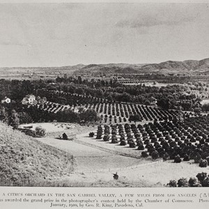 Citrus orchard in the San Gabriel Valley, Glendora, January, 1910