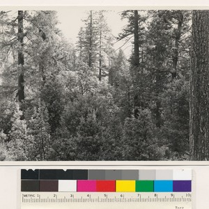 Hardwood-conifer type; old growth trees. Species Pseudotsuga taxifolia, Pinus ponderosa, Lithocarpus densiflora, ...