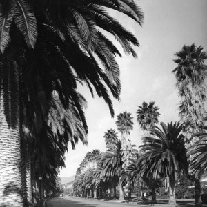 Palms on Beverly Hills street