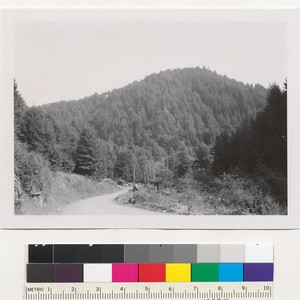 Redwood Region. Second growth about 30 years (?) old. Glen Blair, near ...