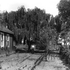 Edward Cochems' house and garden at Hynes, California: Photograph