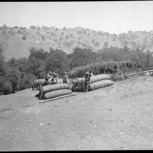 Yokuts Indians with bales of wool. Tule River Reservation, 50 miles from ...