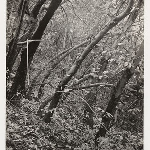 Interior view of woodland type on east slope. Occasional california laurel. Ground ...