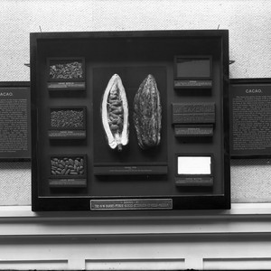 Cacao exhibit (on loan from the N. W. Harris Public School Extension ...