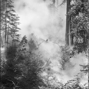 Smoke in forest from fire, Bohemian Grove. [negative]