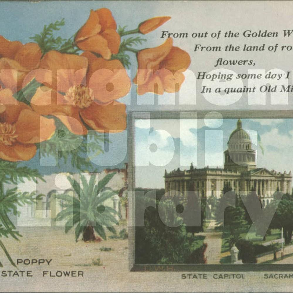 Calisphere Golden Poppy California State Flower