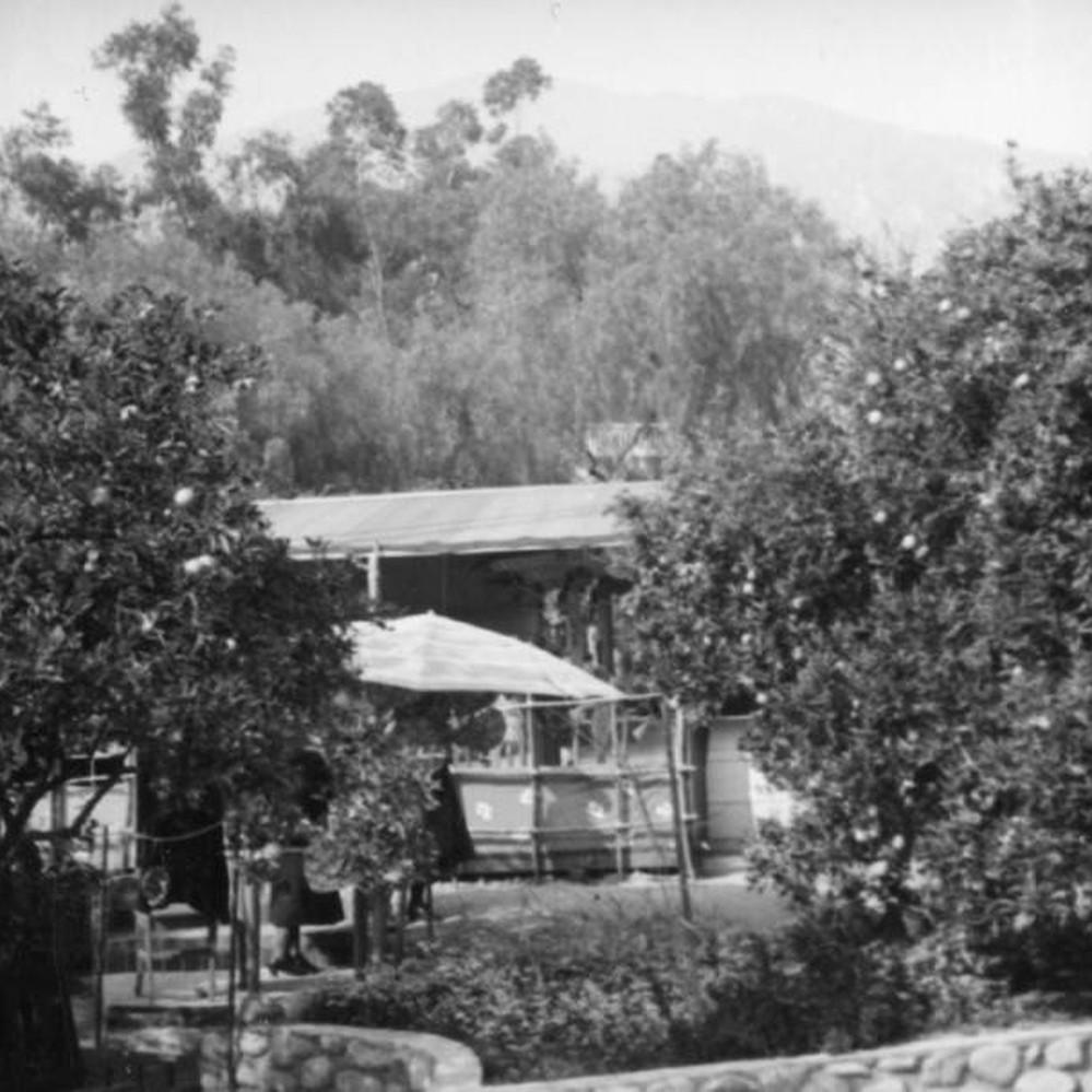 Wistaria Vine Fete Sierra Madre Calisphere